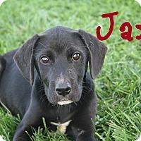 Adopt A Pet :: Jax - Brazil, IN