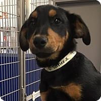 Adopt A Pet :: Ella - Cashiers, NC