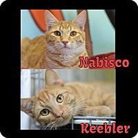 Adopt A Pet :: Keebler170276 - Atlanta, GA
