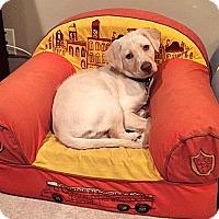Adopt A Pet :: Marley - Oakland, CA
