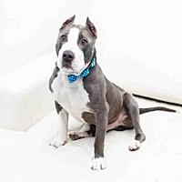 Adopt A Pet :: SMILEY - Hampton Bays, NY