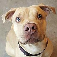 Adopt A Pet :: Chip - Pontiac, MI