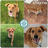 Adopt A Pet :: shayna - Kimberton, PA