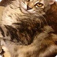 Adopt A Pet :: Goldie - Chandler, AZ