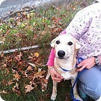 Adopt A Pet :: Peaches - Providence, RI