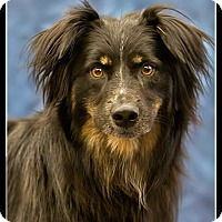 Adopt A Pet :: Bunny - Wickenburg, AZ