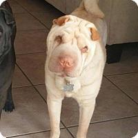 Adopt A Pet :: Yuki - pending - Mira Loma, CA