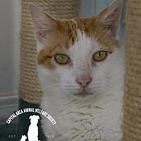 Adopt A Pet :: Taz - Baton Rouge, LA