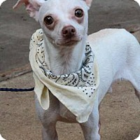 Adopt A Pet :: Frankie - Lebanon, CT