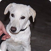 Adopt A Pet :: Devo - Phoenix, AZ