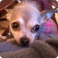 Adopt A Pet :: Dudley - Jacksonville, FL