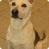 Adopt A Pet :: Mary Margaret - Woodstock, GA