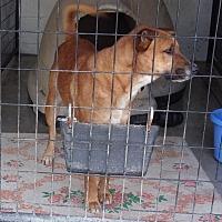 Adopt A Pet :: Charity - Jamestown, TN