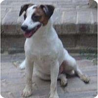 Adopt A Pet :: Sammy - Houston, TX