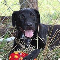 Adopt A Pet :: DJ - Foster, RI
