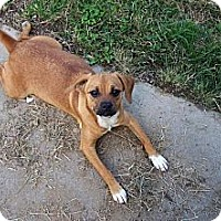 Adopt A Pet :: Wilma - Houston, TX