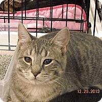 Adopt A Pet :: Maxine - Riverside, RI