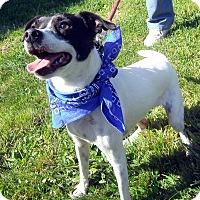 Adopt A Pet :: Jack Jr. - Crescent City, CA
