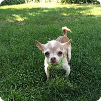 Adopt A Pet :: Javier - Chicago - Dayton, OH