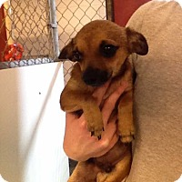 Adopt A Pet :: Tiny Tim - Hampton, VA