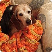 Adopt A Pet :: Otis - Greenville, SC
