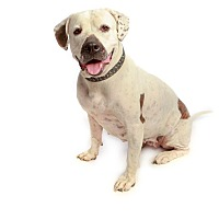 Adopt A Pet :: JERSEY GIRL: NO adoption fee - Scottsdale, AZ