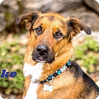 Adopt A Pet :: Duke -Adopted July 2016! - Huntsville, ON