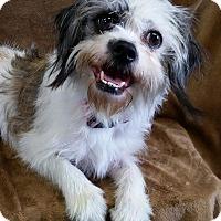 Adopt A Pet :: Bella Turner - Urbana, OH