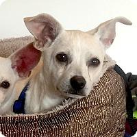 Adopt A Pet :: *Ren - PENDING - Westport, CT