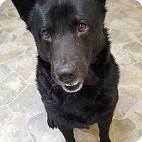 Adopt A Pet :: Coal - Fennville, MI