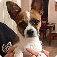 Adopt A Pet :: Banjo in Houston - Houston, TX