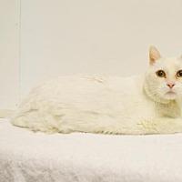 Adopt A Pet :: *CIRRUS - Sacramento, CA