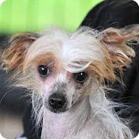 Adopt A Pet :: Carmie - Vernonia, OR