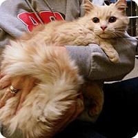 Adopt A Pet :: Boone - Hockessin, DE