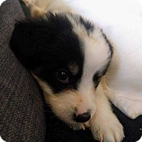 Adopt A Pet :: Bernie_2017 - Virginia Beach, VA