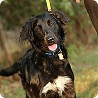 Adopt A Pet :: Annie - Lancaster, OH
