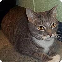 Adopt A Pet :: Steven - Chesapeake, VA