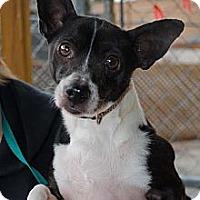 Adopt A Pet :: Sambuca - Columbia, TN