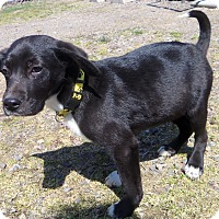 Adopt A Pet :: DUKE - Medford, WI