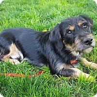 Adopt A Pet :: Sullivan - Troy, MI