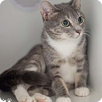 Adopt A Pet :: Heather - Merrifield, VA