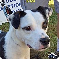 Adopt A Pet :: Oreo - Jasper, GA