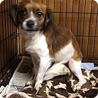 Adopt A Pet :: FLOR - San Pablo, CA