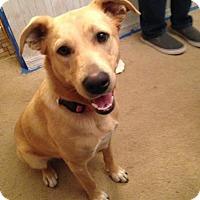 Adopt A Pet :: Danna - Ashland, KY
