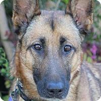 Adopt A Pet :: Kelsie von Kiefer - Los Angeles, CA