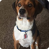 Adopt A Pet :: Bently - Ogden, UT