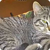 Adopt A Pet :: Marvel - Milwaukee, WI
