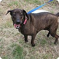 Adopt A Pet :: Jenny Craig - Spring Branch, TX