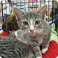 Adopt A Pet :: Jaso - Vero Beach, FL