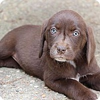 Adopt A Pet :: Quinn - Cumming, GA